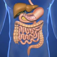 Neuroendocrine Cancer Nutrition Series Article 2 - Gastrointestinal Malabsorption